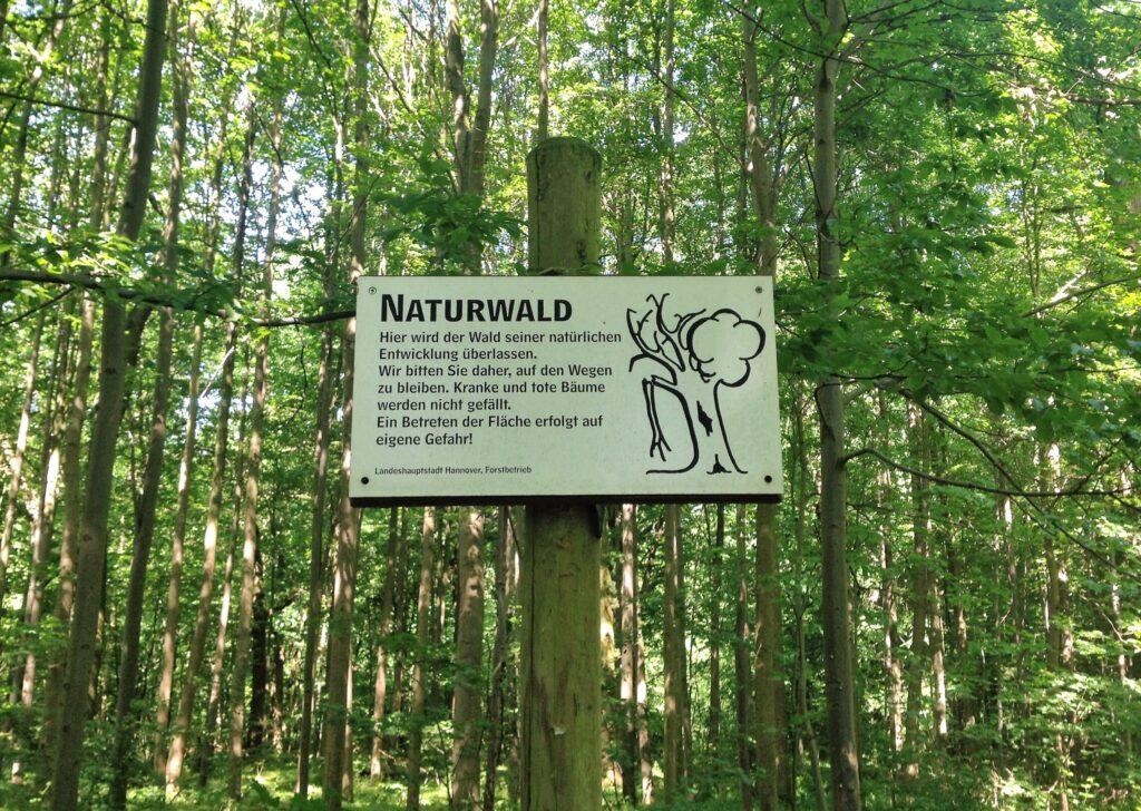 Foresta di Eilenriede, Hannover
